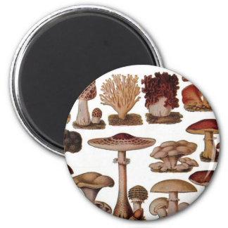 Vintage Mushroom 2 Inch Round Magnet