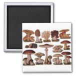 Vintage Mushroom 2 Inch Square Magnet