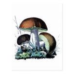 vintage mushroom art post cards