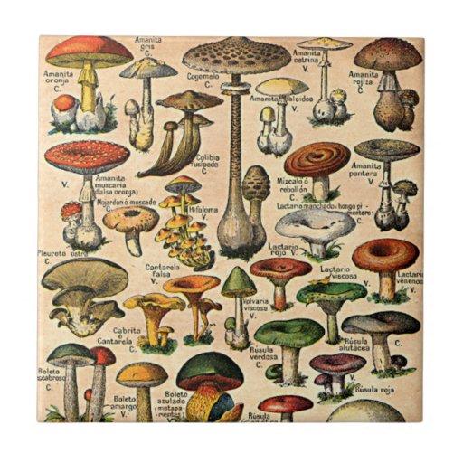 Vintage Mushroom Guide Tile