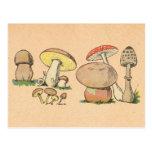 Vintage Mushroom Print Postcard