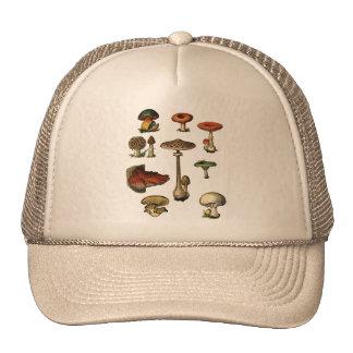 Vintage Mushrooms Hat