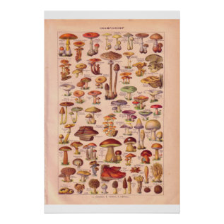 Vintage Mushrooms Poster 1920 at Zazzle