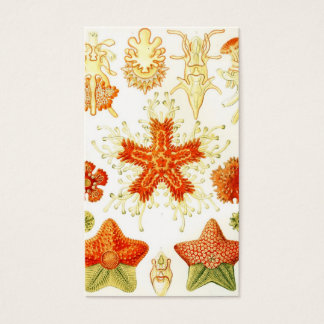 Vintage Naturalist Image of Starfish (Asteroidea) Business Card