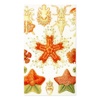 Vintage Naturalist Image of Starfish (Asteroidea) Double-Sided Standard Business Cards (Pack Of 100)