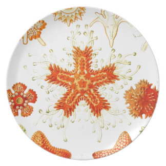 Vintage Naturalist Image of Starfish (Asteroidea) Party Plates