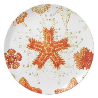 Vintage Naturalist Image of Starfish (Asteroidea) Dinner Plate