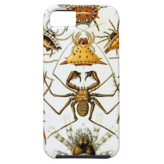 Vintage Nature Art 6 iPhone 5 Cover