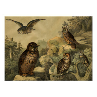 Vintage Nature's Wonders Owls in Forest Art Deco Poster