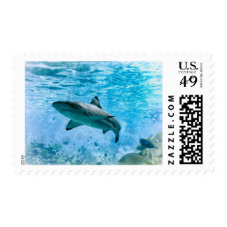 Vintage Nautical Stripe Shark Postage