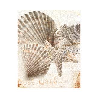 Vintage nautilus starfish seashells gallery wrapped canvas