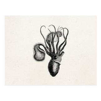 Vintage Nautilus Without Shell 1800s Crustaceans Postcard