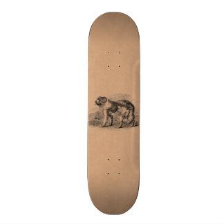 Vintage Newfoundland Dog  1800s Dogs Illustration Custom Skateboard