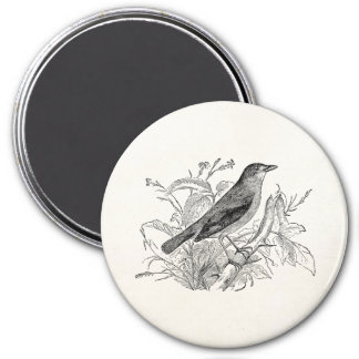 Vintage Nightingale Bird Personalized Retro Birds Magnet