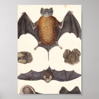 Vintage Nocturnal Bat Specimen Canvas Print