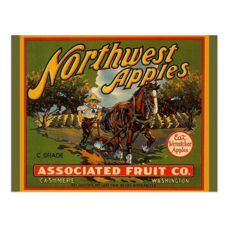 Vintage Northwest WA Apples Draft Horse Postcards