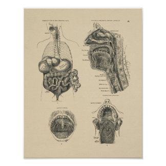 Vintage Nose Throat Anatomy 1880 Print