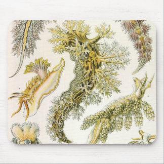 Vintage Nudibranchia, Sea Slugs by Ernst Haeckel Mouse Pad