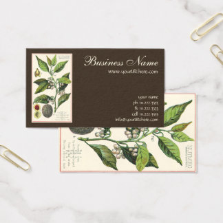 Vintage Nutmeg Plant Fruit Seeds, Food Herbs Spice Business Card