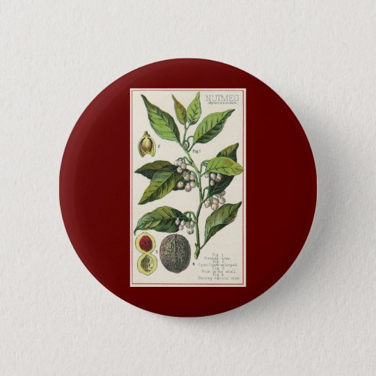 Vintage Nutmeg Plant Fruit Seeds, Food Herbs Spice Button