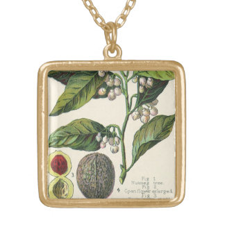 Vintage Nutmeg Plant Fruit Seeds, Food Herbs Spice Gold Plated Necklace