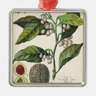 Vintage Nutmeg Plant Fruit Seeds, Food Herbs Spice Metal Ornament