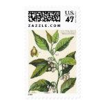 Vintage Nutmeg Plant Fruit Seeds, Food Herbs Spice Postage