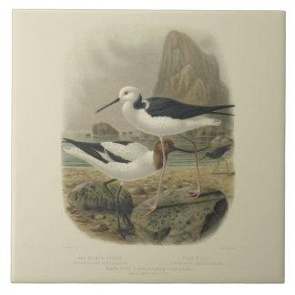 Vintage NZ Birds Red-Necked Avocet and Pied Stilt Tile