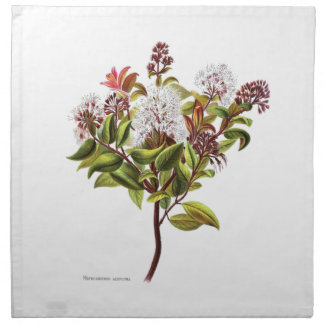 Vintage NZ Flowers - Meterosideros albiflora Napkin