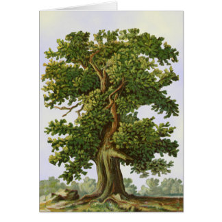 Vintage Oak Tree Art Blank Art Card