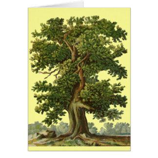 Vintage Oak Tree Art Blank Card