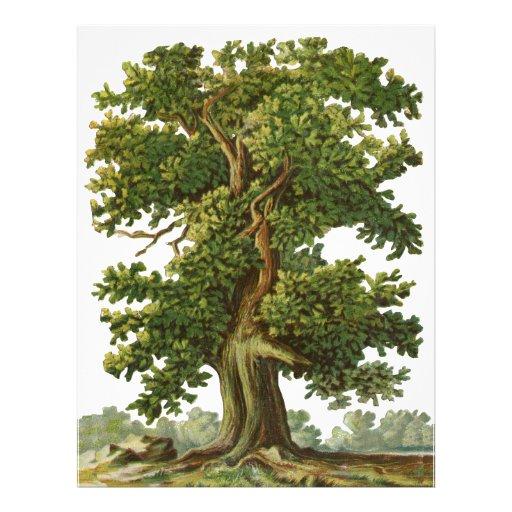 Vintage Oak Tree Custom Flyer