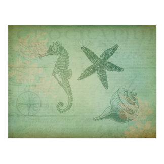 Vintage Ocean Animals and Seashells Postcard