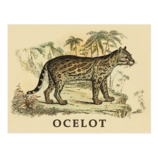 Vintage Ocelot Postcard