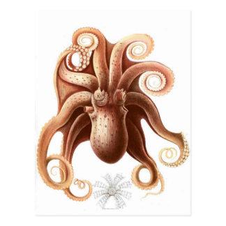 Vintage Octopus Brown Postcard