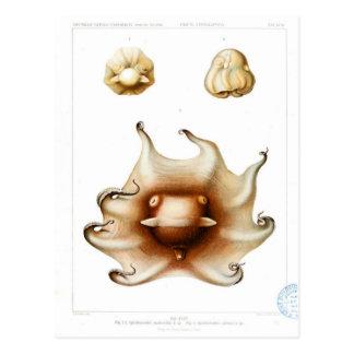 Vintage Octopus Illustration Postcard