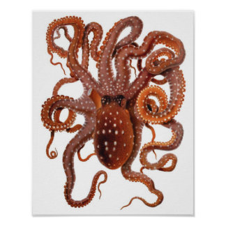 Vintage Octopus Macropus, Marine Aquatic Animals Poster