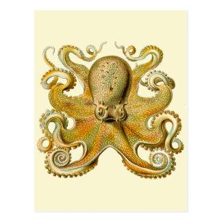 Vintage Octopus Postcard