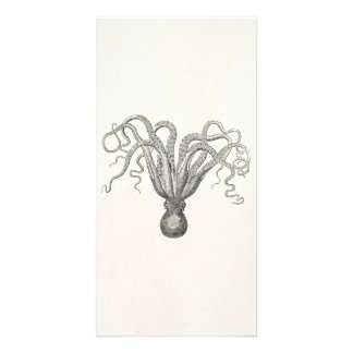 Vintage Octopus Poulpe Eight Armed Cuttle Fish Photo Card