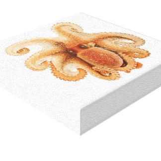 Vintage Octopus Salutii, Marine Aquatic Animals Canvas Print