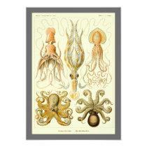 Vintage Octopus Squid by Ernst Haeckel Invitation
