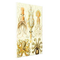 Vintage Octopus Squid Gamochonia by Ernst Haeckel Canvas Print