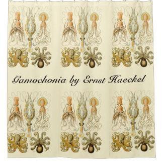 Vintage Octopus Squid Gamochonia by Ernst Haeckel Shower Curtain