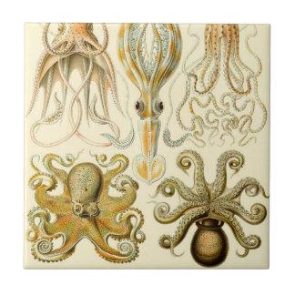 Vintage Octopus Squid Gamochonia by Ernst Haeckel Tile