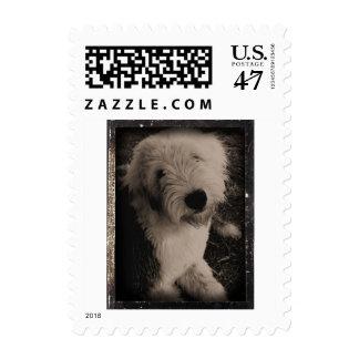 Vintage Old English Sheepdog Stamp