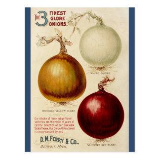 Vintage onion chart illustration card