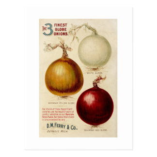 Vintage onion chart illustration card