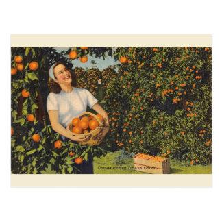 Vintage Orange Picking Time Florida Postcard