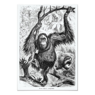 Vintage Orangutan Illustration -1800's Monkey 3.5x5 Paper Invitation Card