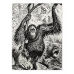 Vintage Orangutan Illustration -1800's Monkey Post Card